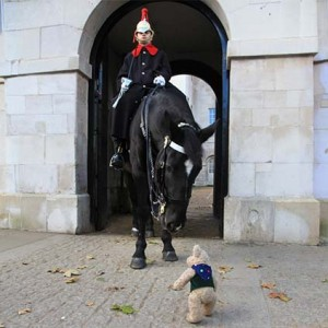 Binky Bear Horse Guards