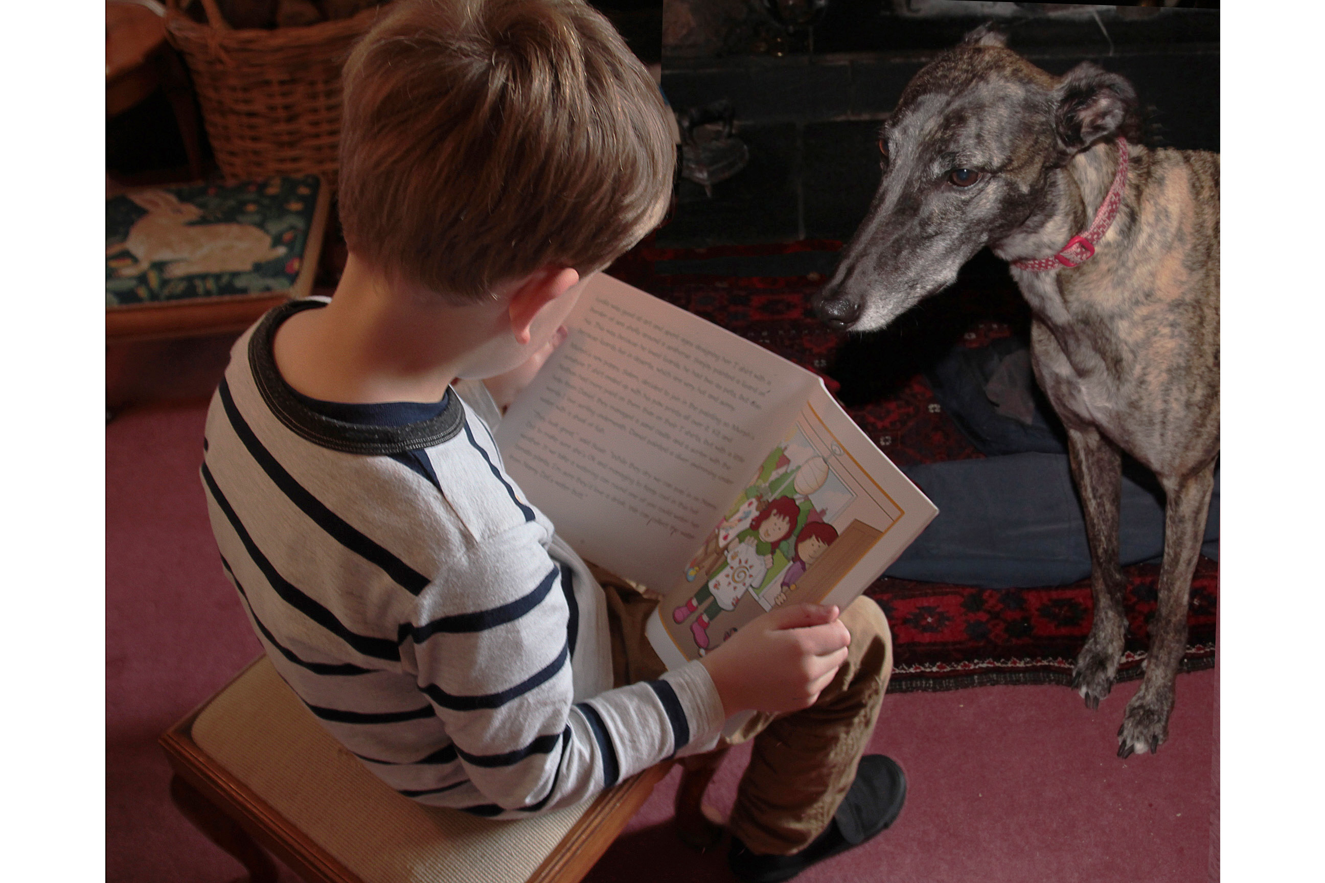 Picture of a boy reading to a reading dog
