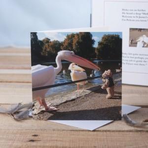 Binky and Pelicans Greetings Card