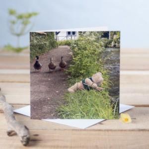 Binky goes fishing in Alresford Card Greetings Card