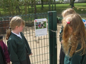 reading-about-the-trail-at-woodlands-primary